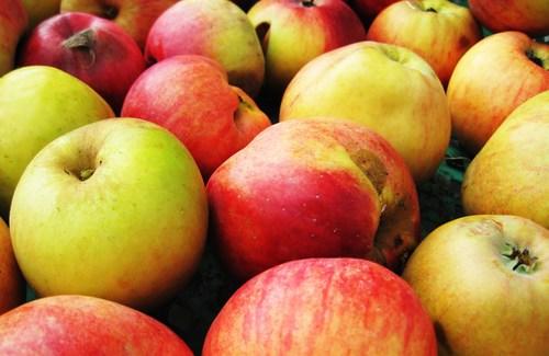 Comment conserver pommes et poires après récolte