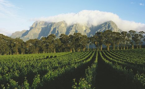 An Insider's Guide to South Africa's Cape Winelands | Vitabella Wine Daily Gossip | Scoop.it