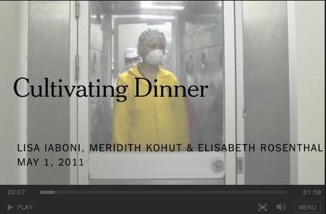 NYTimes Video: Cultivating Dinner | Mrs. Watson's Class | Scoop.it