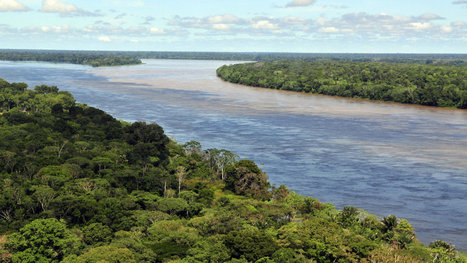 Brazil's recent fight against deforestation has been a huge success | Rainforests - Global environments | Scoop.it