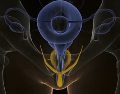 The Internal Clitoris | Prospection sexualité | Scoop.it