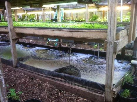 Edmonds Community College Horticulture Department receives $9500 grant for aquaponics | Aquaponics in Action | Scoop.it
