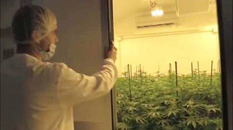 The Italian army has begun growing 100kg of weed a year | Alcohol & other drug issues in the media | Scoop.it