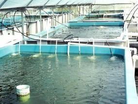 Pêche et aquaculture : un guichet unique à la disposition des investisseurs   aquacultures   Scoop.it