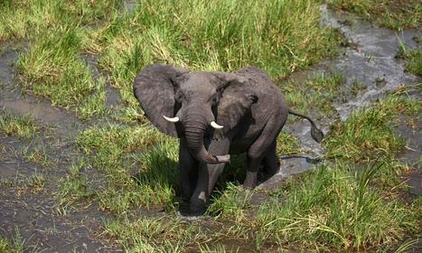 South Sudan's wildlife becomes acasualty of war   Animal rights   Scoop.it