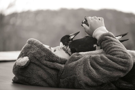 Touching Photos of a Family's Special Bond with the Magpie They Rescued | What about? What's up? Qué pasa? | Scoop.it