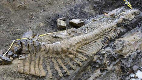 Dinostaart van bijna vijf meter ontdekt in Mexico | KAP-ElhaddiouiA | Scoop.it