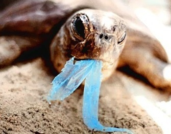 The Tortoise and the Bag   Faun Kime   All about water, the oceans, environmental issues   Scoop.it