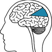 Using Just 10% of Your Brain? Think Again-Neuromyths | Wiki_Universe | Scoop.it