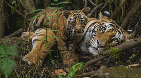 Silent Forests: Battling Hunting Overkill in Southeast Asia | Endangered species | Scoop.it