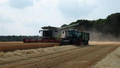 Winter barley cut on Norfolk/Suffolk border (17 July) | UK #harvest13 | Scoop.it