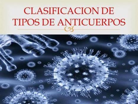 CLASIFICACION de TIPOS de ANTICUERPOS Ppt Presentation | INMUNOGLOBULINAS... | Scoop.it
