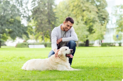 When a Dog Stops Eating: Signs and Symptoms to Evaluate | NuVet Plus Reviews | Scoop.it