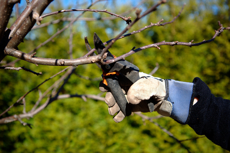 How to Identify Pest and Disease Problems and Discover When the Time to Book a Tree Removal Service Has Come » CJ S Tree Service of Omaha | Tree Service | Scoop.it