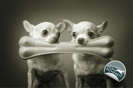 Bienvenue dans le monde doucement décalé de Ron Schmidt | Fashion Pets | Scoop.it