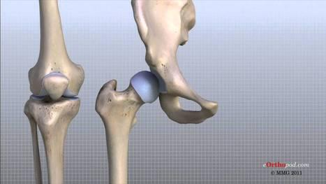 Knee Anatomy Animated Tutorial - YouTube | Case... | New Group 21 | Scoop.it