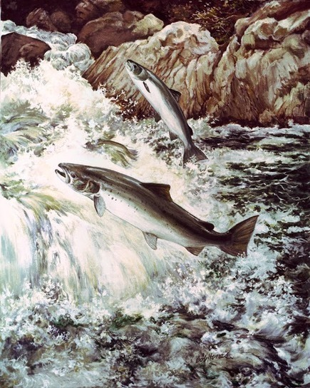 Atlantic Salmon - East Coast Stocking Histories | nature and its beauty | Scoop.it