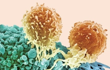 How to get the entire immune system to attack cancer | KurzweilAI | Longevity science | Scoop.it