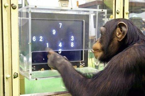Erst umschauen, dann gehen: Schimpansen verstehen Straßenverkehr #science #wissenschaft | Limitless learning Universe | Scoop.it