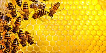 Se le api sparissero, vivremmo solo quattro anni   best5.it   Scoop.it