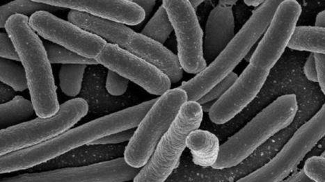 Microbiote : ces bactéries qui nous veulent du bien | Microbiologie, Hygiène et Sécurité des aliments | Scoop.it
