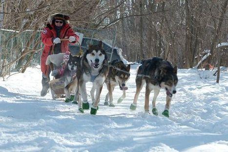 Les chiens de traîneau succèdent aux canoteurs des glaces | Le canot à glace - Ice canoeing | Scoop.it