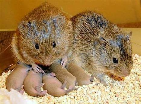 When hurt, rodents may console each other:  neural mechanisms underlying empathetic responses | Empathy and Animals | Scoop.it