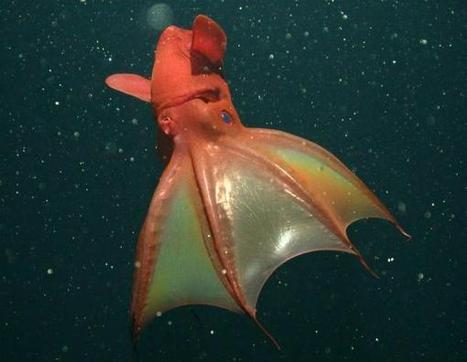 Earth's Final Frontier: Mysteries of the Deep Sea   Blue Planet   Scoop.it