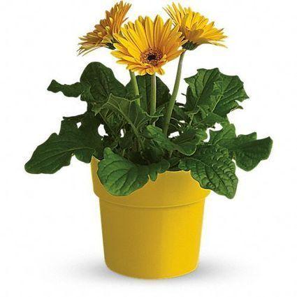 Top Reasons to Send Flowers Online | Plants Online | Scoop.it