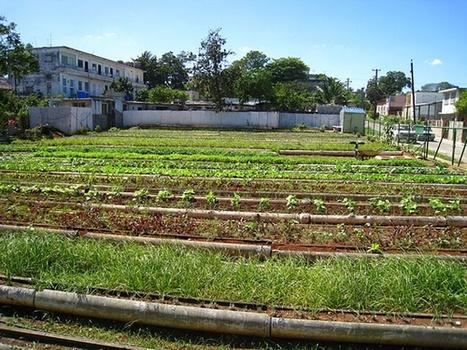 Elevar producción de alimentos: prioridad del gobierno cubano - Prensa Latina | Cultivos Hidropónicos | Scoop.it