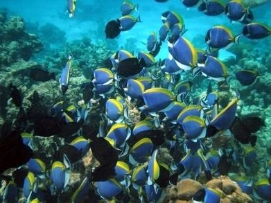 La vie océanique au bord d'une extinction de masse ? | Toxique, soyons vigilant ! | Scoop.it