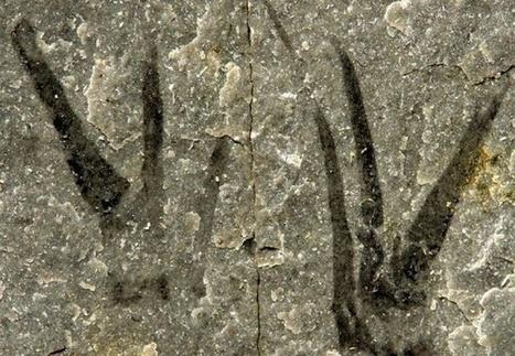Un fossile aux pinces en forme de ciseaux baptisé au nom de Johnny Depp | EntomoNews | Scoop.it