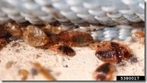Learn How to Manage Ants and Other Pests Via Don't Bug Me Webinars - News Line | Good Gardening News and Advice | Scoop.it