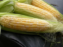 4 African Countries Develop Plans For The Adoption Of Drought Tolerant Maize | MAIZE | Scoop.it