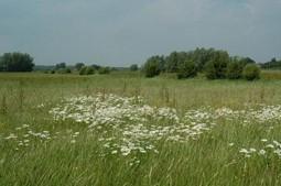 Agrarisch natuurbeheer over een andere boeg « Netwerk Platteland | Nieuws van Netwerk Platteland juni-juli 2013 | Scoop.it