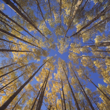 When Nature Speaks, Who Are You Hearing? | SlowNow | Scoop.it
