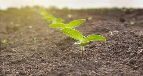 L'agriculture écologique et durable face au double défi du climat et de la démographie | Ager Bestia Cibus (ABC) | Scoop.it