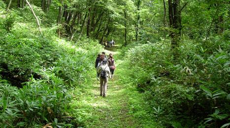 Shinrin-yoku: The Japanese Art of Forest Bathing | Spiritual mindfulness | Scoop.it