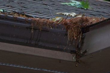 How clogged gutters can cause foundation damage | Gutter Repair System | Scoop.it