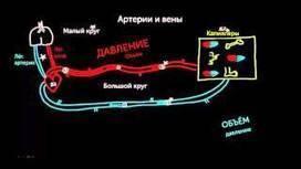(RU) (VIDEO) - Медицина и здоровье | KhanAcademyRussian | Glossarissimo! | Scoop.it