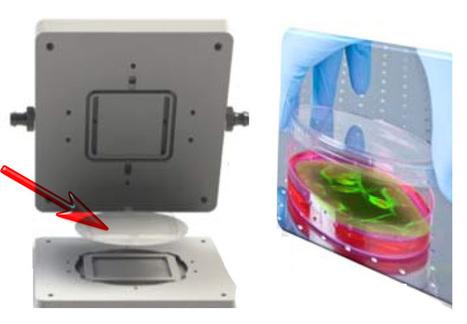 Bioreactor para células que simula condiciones in vivo | Biochemical Engineering | Scoop.it