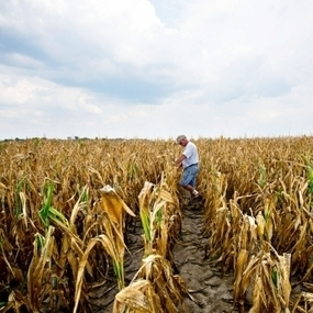USAID Offers $25 Million for Solutions to Global Food Crisis | Local Food Systems | Scoop.it