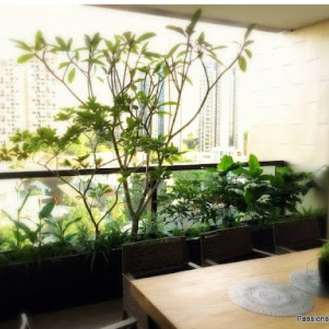 Indoor Plant Selection Tips and Ideas   markbouchar072   Scoop.it