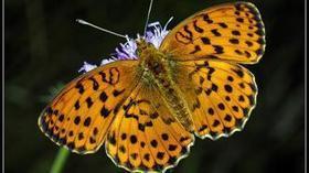 Ambiente: 60% delle farfalle scomparso in venti anni - La Stampa | LucaScoop.it | Scoop.it