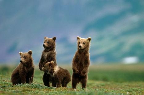 Captivating Tourists Spots In Alaska   Teechymantra   Scoop.it