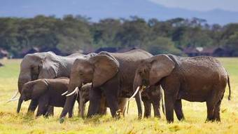 Terrorism and the ivory trade | Wildlife Trade: a billion dollar industry | Scoop.it