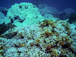 Climate of Coral Reefs | Coral Reefs | Scoop.it