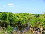 State agencies create new wetlands in New Bern | Research from the NC Agricultural Research Service | Scoop.it