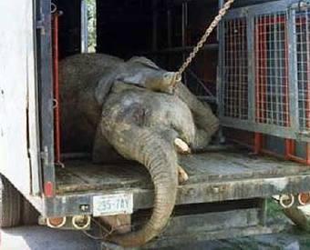 Alegaciones para eliminar los espectáculos con animales | ECO-DIARIO-ALTERNATIVO | Scoop.it