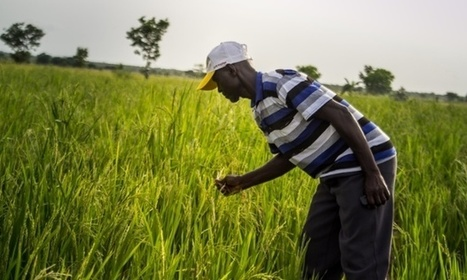 The mobile phone-powered lifeline for farmers in Ghana | Financial Inclusion | Scoop.it